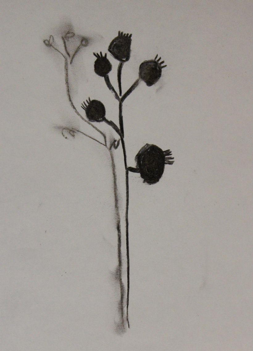 Year-5-seed