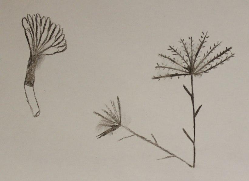 Year-5-seed5
