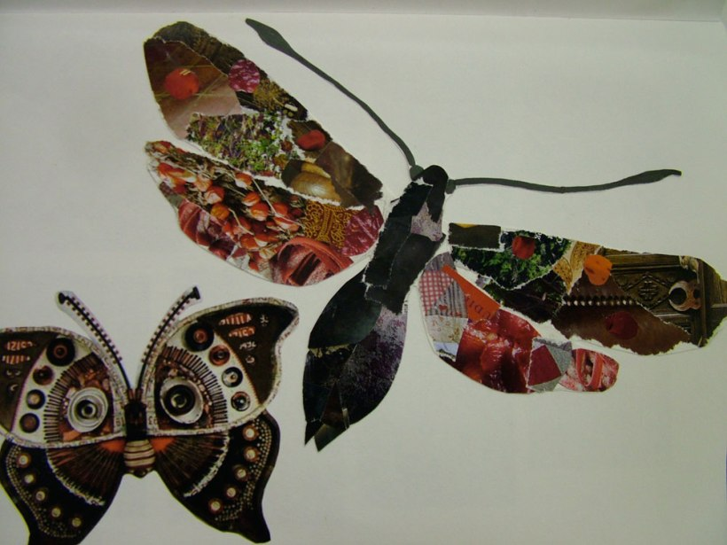 Year-8-insects11
