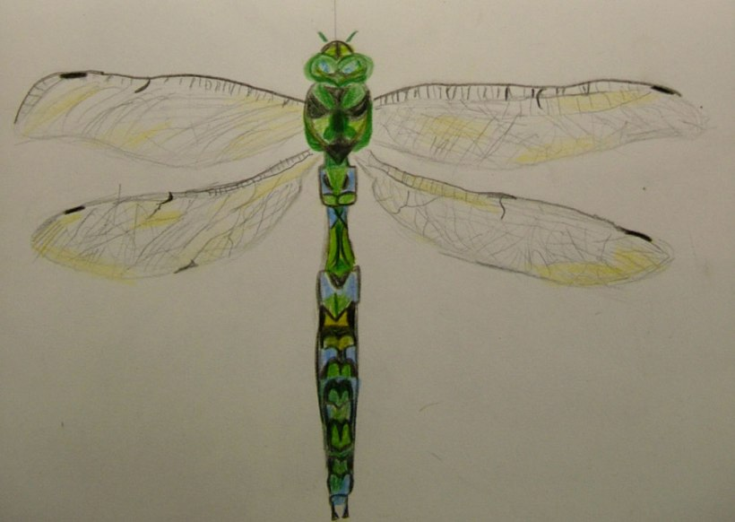 Year-8-insects9
