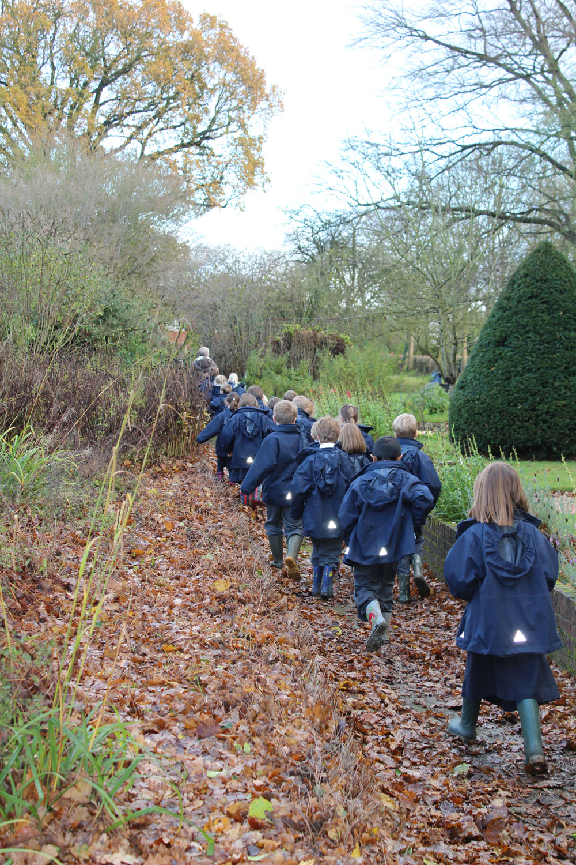 Planting Live Oak Tree Acorns : Prep school pupils plant an oak tree hethersett old hall