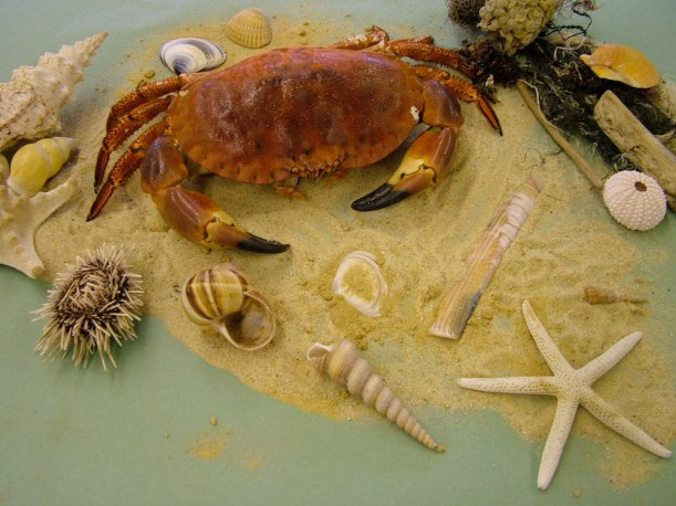 Year-7-art-crab