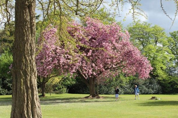 Blossom-grounds