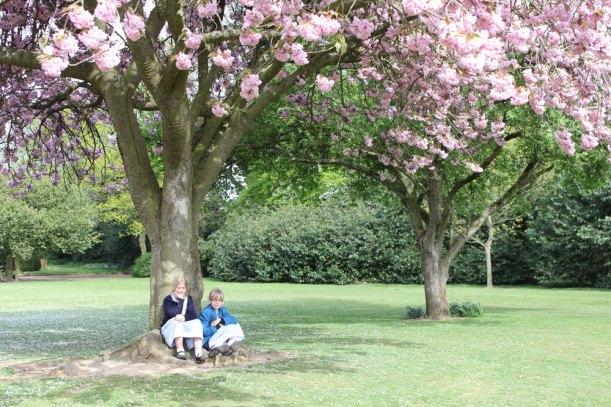 Blossom-grounds2