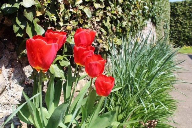 flowers-spring2