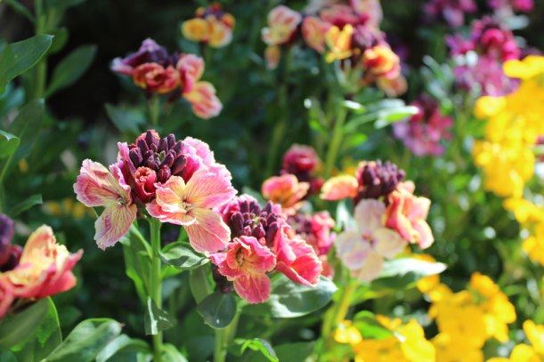 flowers-spring3