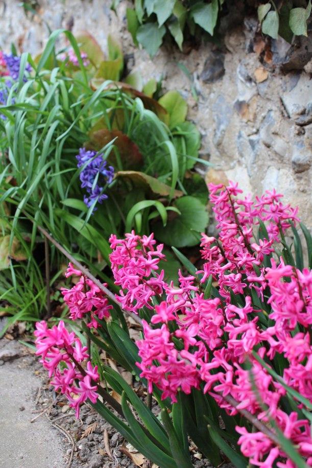 spring-flowers5