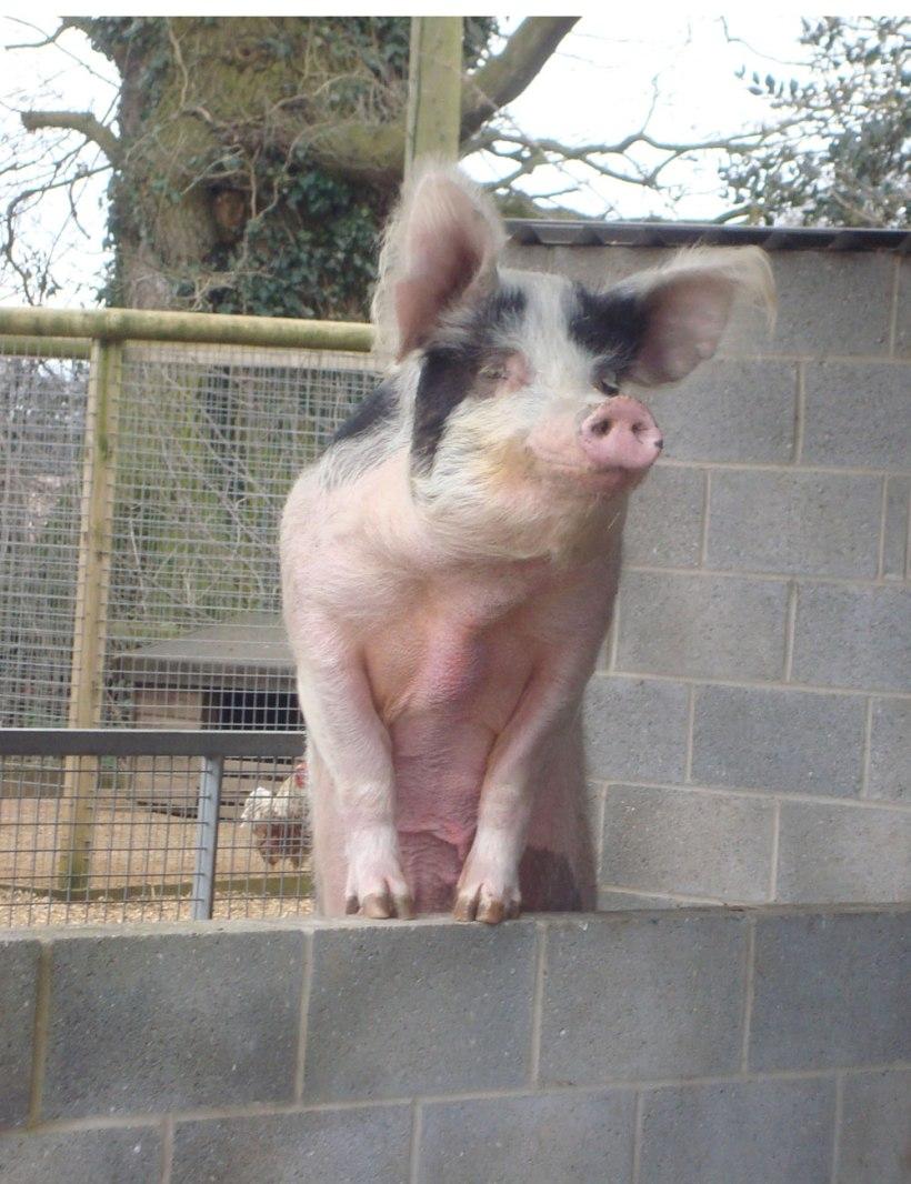 Wroxham-Barns4