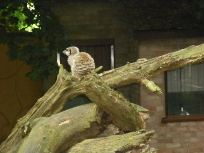 Nursery-Reception-Zoo14