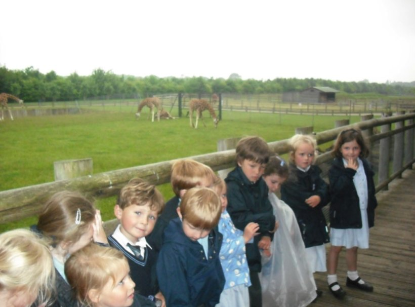 Nursery-Reception-Zoo16