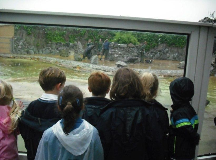 Nursery-Reception-Zoo3