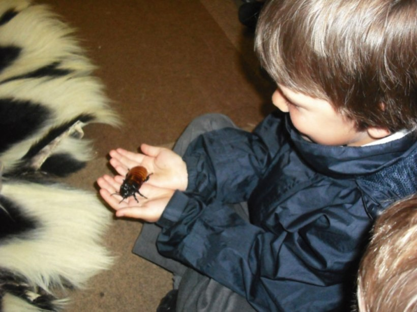 Nursery-Reception-Zoo6
