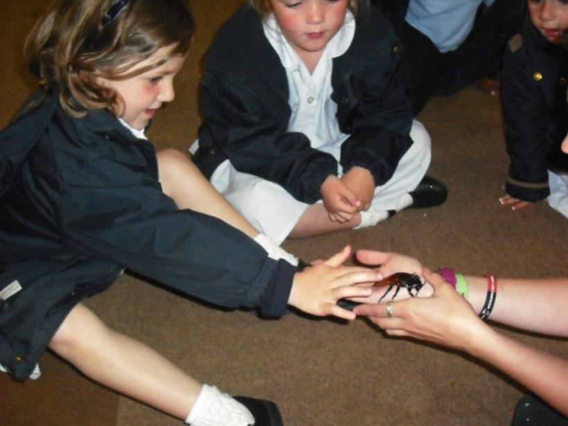 Nursery-Reception-Zoo7