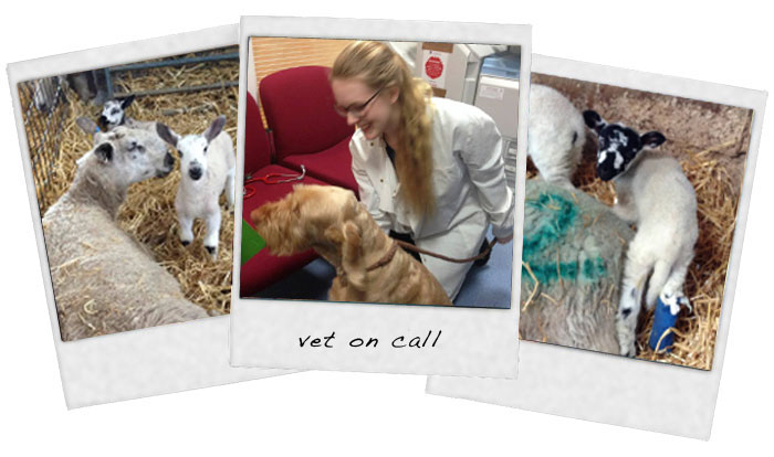 polaroid-photos-vet-on-call