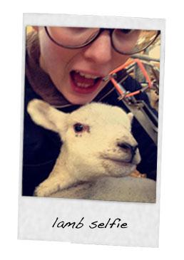 single-polaroid-sheep