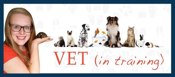 vet-banner