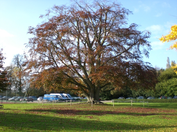 Tree in Autumn and carpark2