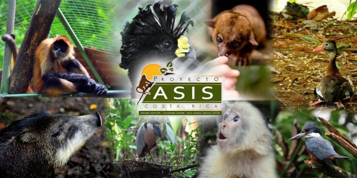 asis-1-copia-8218933618