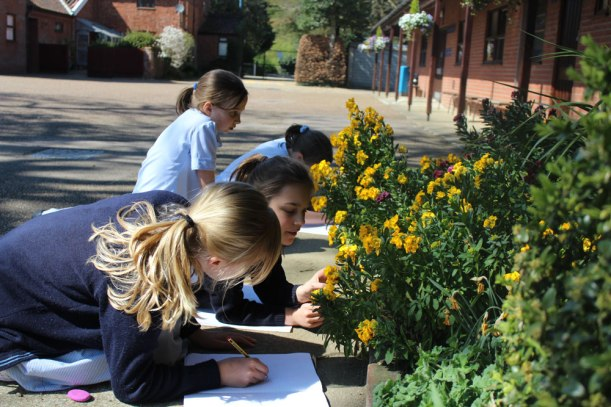 Year-5-science-plants