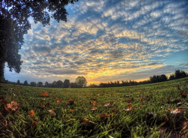 field hdr 151015 (2)