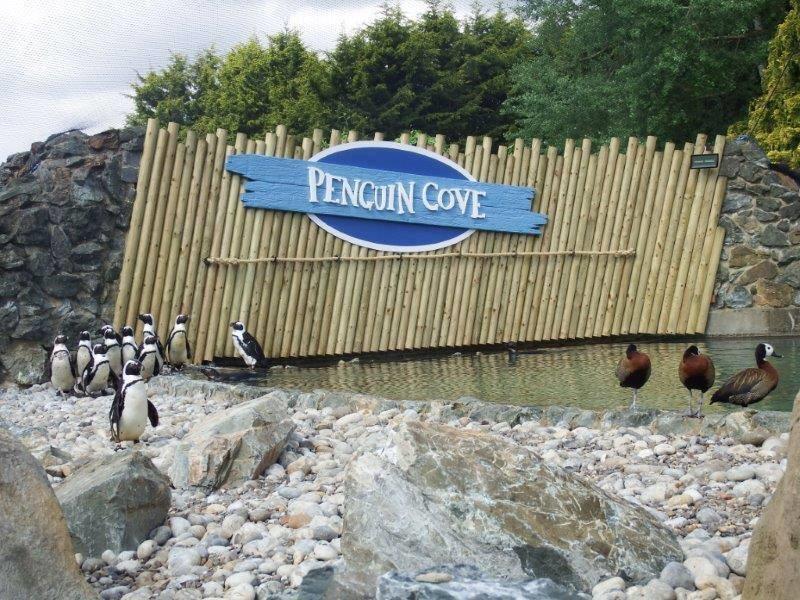 banham penguin cove
