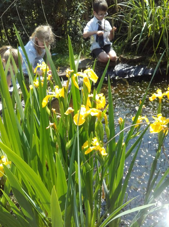 Year 1 pond dipping