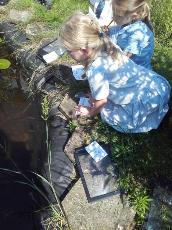 Year 1 pond-dipping2