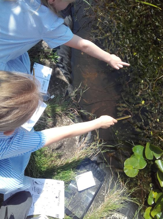 YEAR 1 POND-DIPPING3