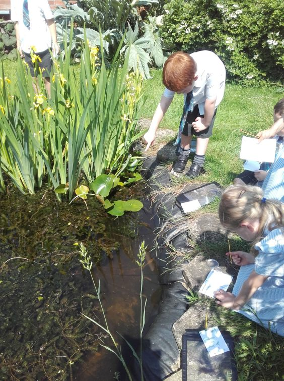 Year 1 pond-dipping4