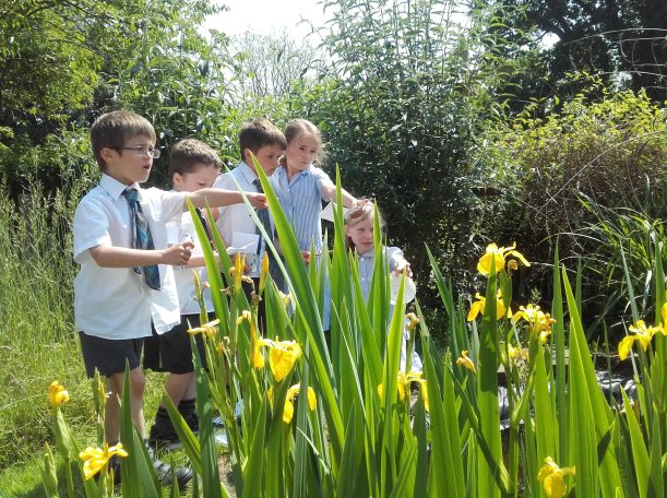 Year one pond-dipping5