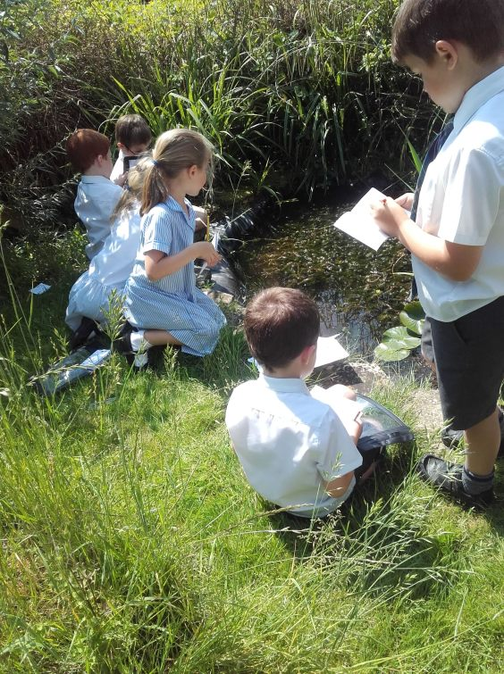 Year one pond-dipping6