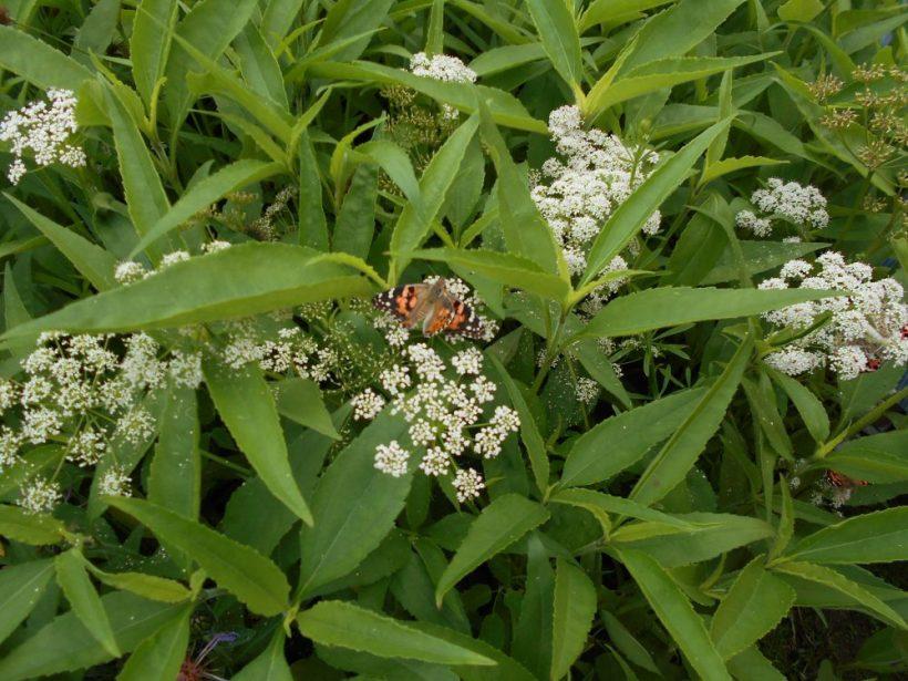 Butterfly Release 3