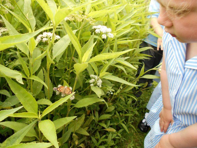 Butterfly Release 5