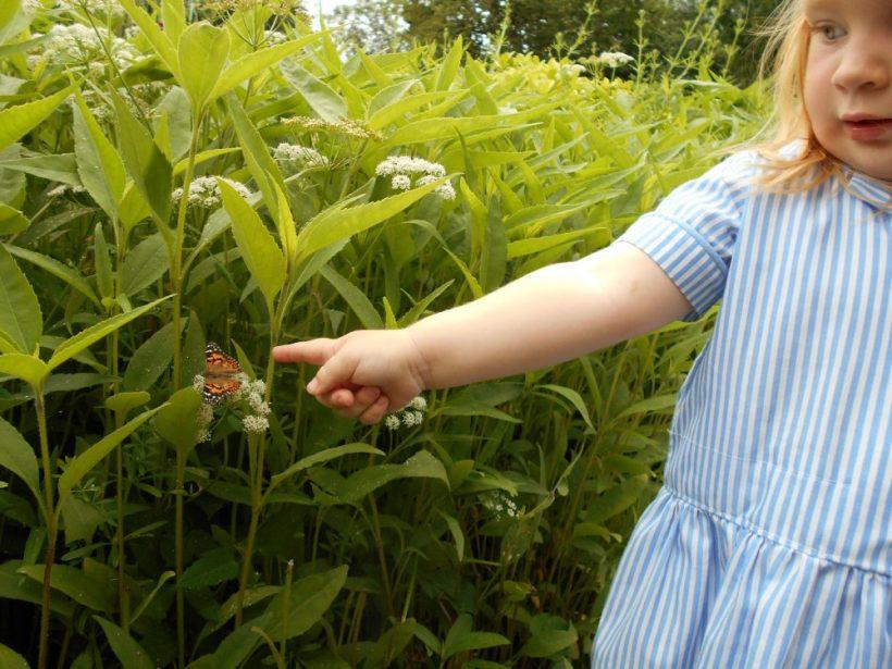 Butterfly Release 6