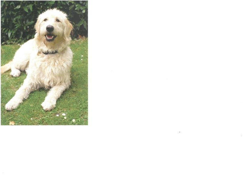 ava-guide-dog-1