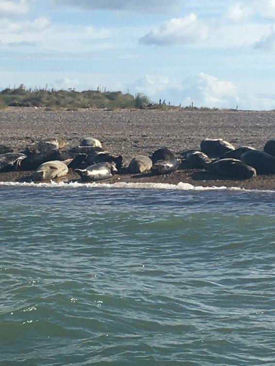 boarders-seals2