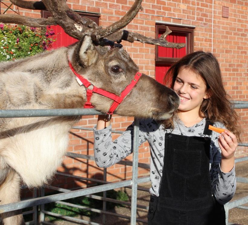 christmas-reindeer7
