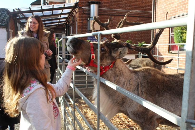 christmas-reindeer8