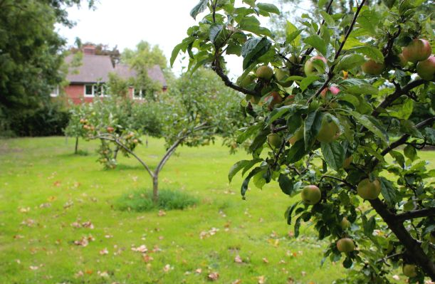 Pretty orchard in rural Norfolk private school grounds.