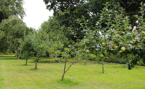 Orchard in private school gardens based in Norwich, Norfolk.
